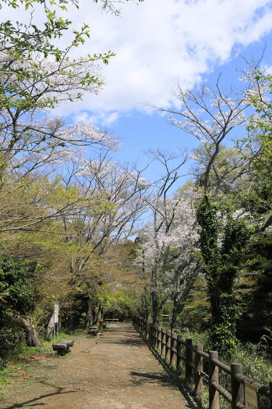 池の公園へお花見♪_b0275998_13435231.jpg