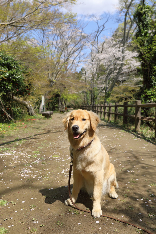 池の公園へお花見♪_b0275998_13450431.jpg