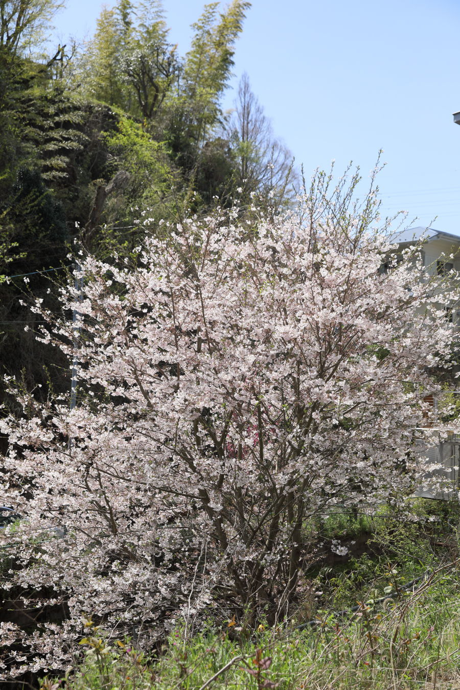池の公園へお花見♪_b0275998_14105154.jpg