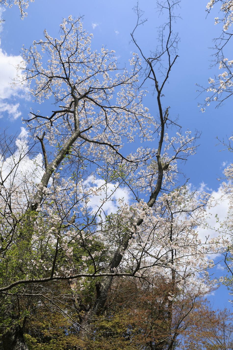 池の公園へお花見♪_b0275998_14121776.jpg