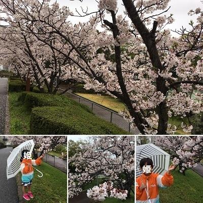 襲撃と桜と新作エプロン♪_f0372998_12580739.jpg