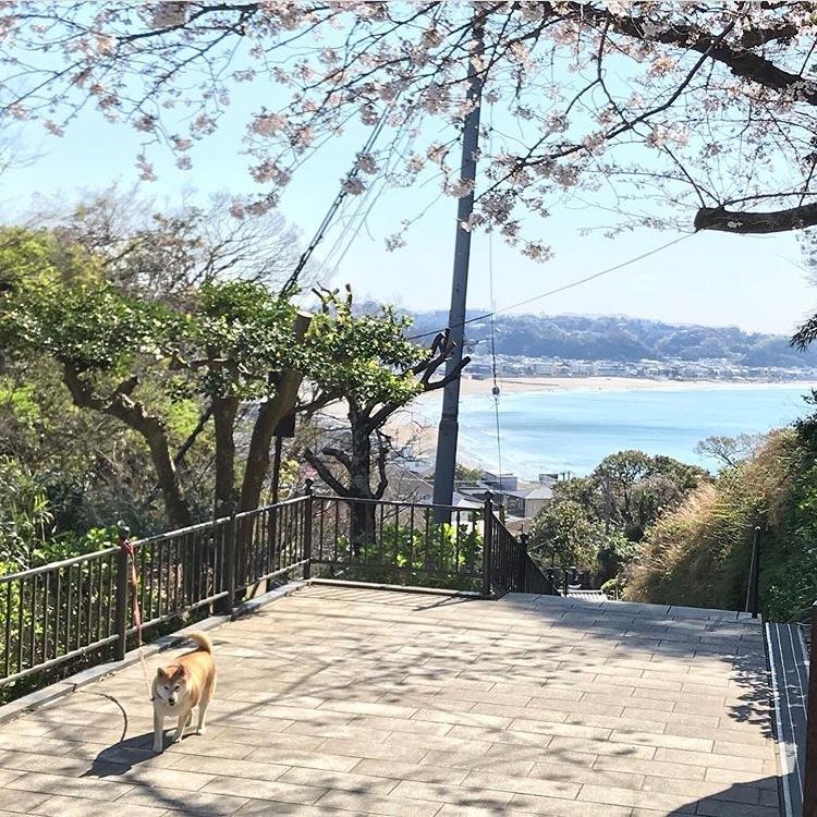 4月のお休みと春の花_a0233202_17420684.jpeg