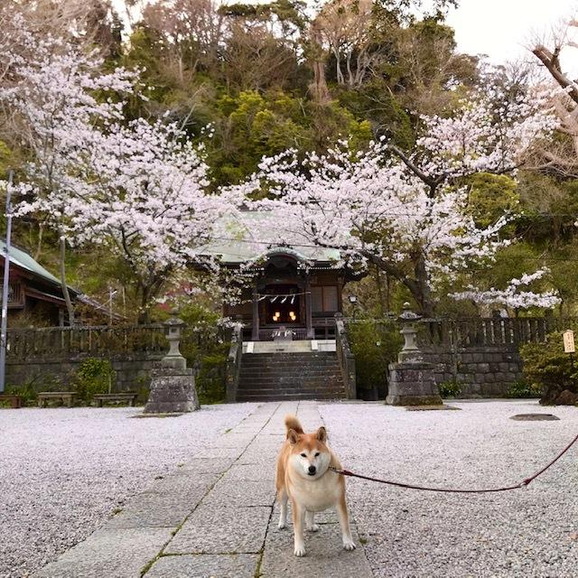 4月のお休みと春の花_a0233202_17455577.jpg