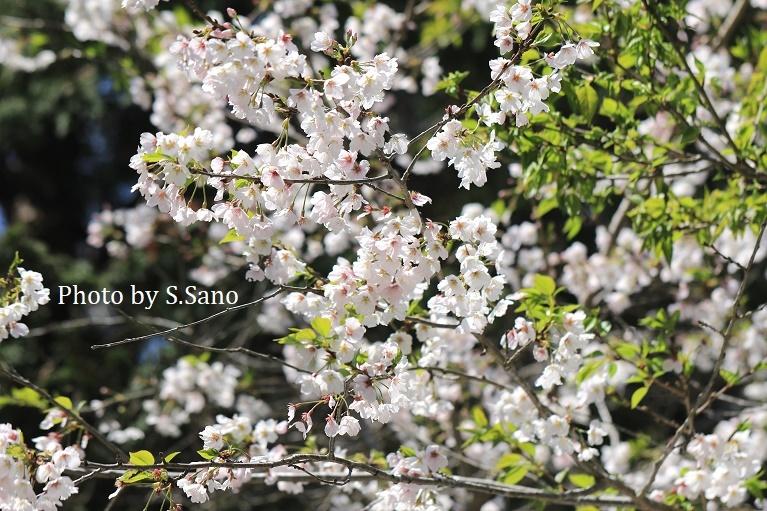 三浦半島の里山(2020年4月)_b0348205_17192485.jpg