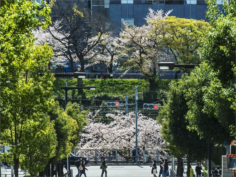 街は静かに…  4月2日(木) 6870_b0069507_01273912.jpg
