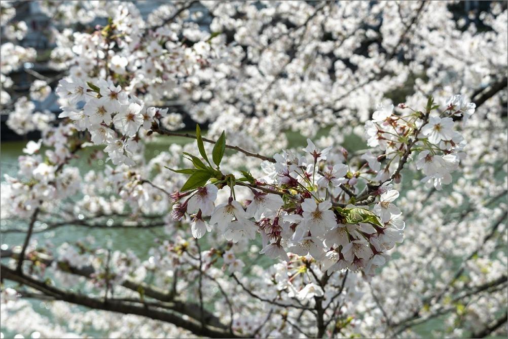 街は静かに…  4月2日(木) 6870_b0069507_01274010.jpg