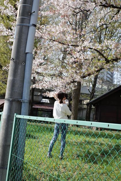 04.03 穏やかな日差しと桜_a0390712_21160985.jpg