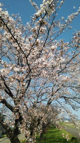 春の花パワ-で元気を_d0144720_11144765.jpg