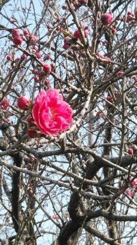 春の花パワ-で元気を_d0144720_11222907.jpg