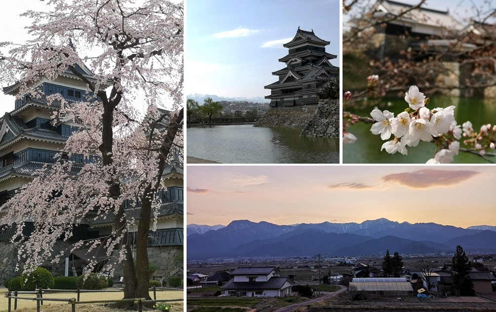 桜の様子は_a0212730_19151792.jpg
