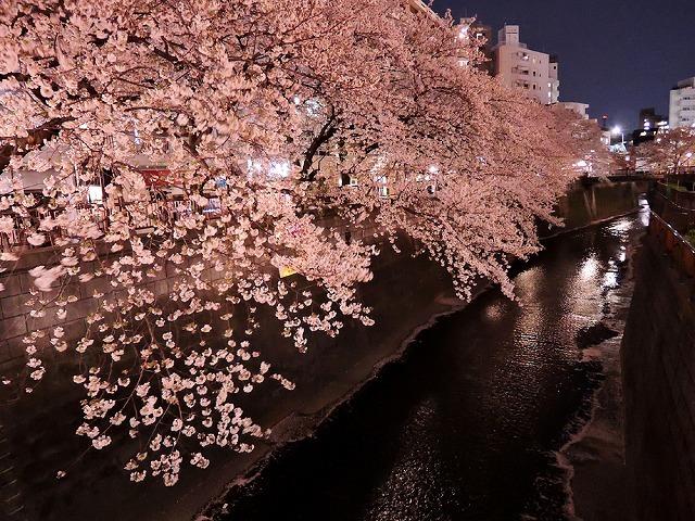 アイブラックリバーの桜 2020_c0062832_14395306.jpg
