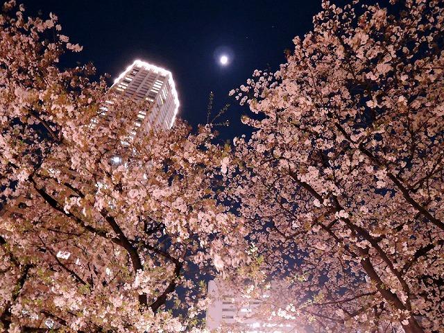 アイブラックリバーの桜 2020_c0062832_14395384.jpg