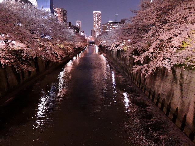 アイブラックリバーの桜 2020_c0062832_14395424.jpg