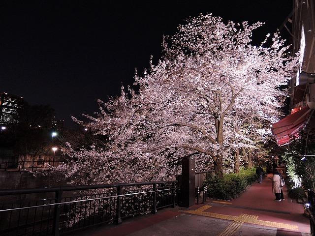 アイブラックリバーの桜 2020_c0062832_14415281.jpg