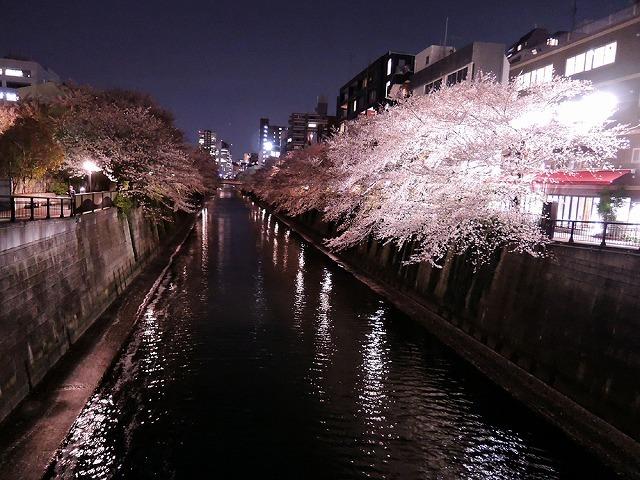アイブラックリバーの桜 2020_c0062832_14422231.jpg