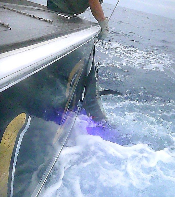 BZ艇さん沖縄でもう7本獲りました_f0009039_13425349.jpg