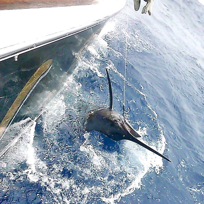 BZ艇さん沖縄でもう7本獲りました_f0009039_13430204.jpg