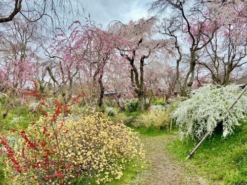 秘密の花園「原谷苑」_b0325640_15350953.jpg