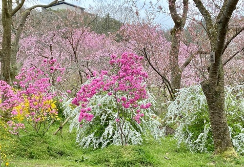 秘密の花園「原谷苑」_b0325640_15351815.jpg