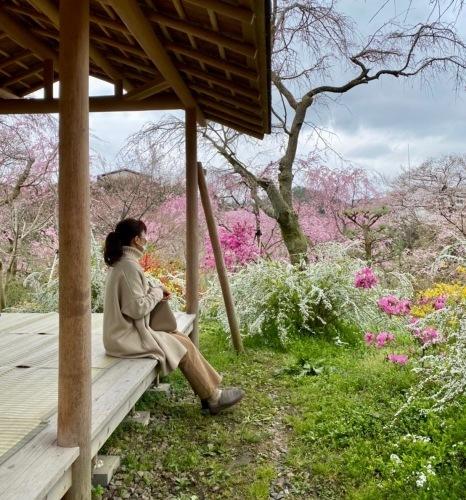秘密の花園「原谷苑」_b0325640_15352675.jpg