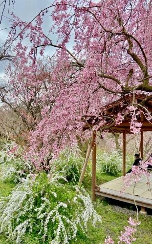 秘密の花園「原谷苑」_b0325640_15353517.jpg