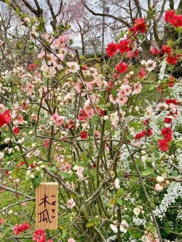 秘密の花園「原谷苑」_b0325640_16150817.jpg