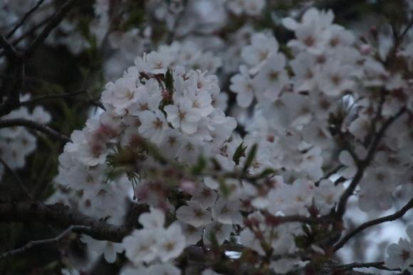 2020年4月4日、5日の福岡・山口公演の延期_d0335541_02033342.jpg