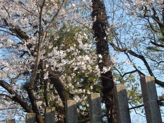 春 遠からじ_c0038742_10144906.jpg
