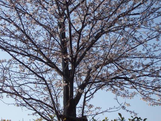 春 遠からじ_c0038742_10150093.jpg