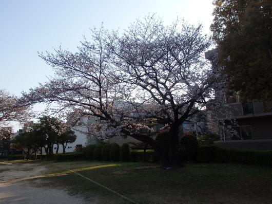 春 遠からじ_c0038742_10150379.jpg