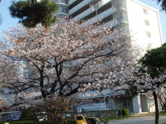 春 遠からじ_c0038742_10150795.jpg