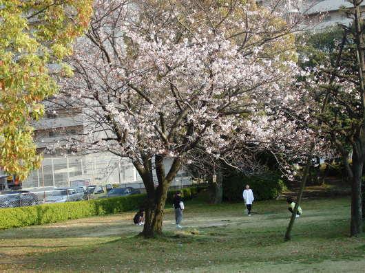 春 遠からじ_c0038742_10151271.jpg