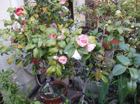 春 遠からじ_c0038742_10151640.jpg