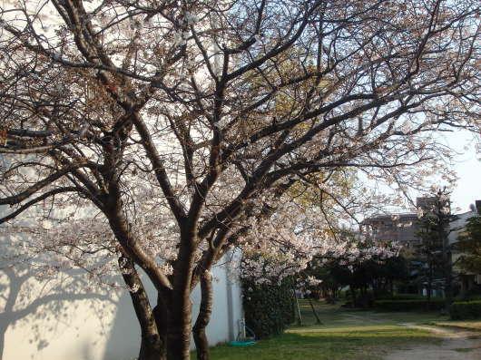 春 遠からじ_c0038742_10152231.jpg