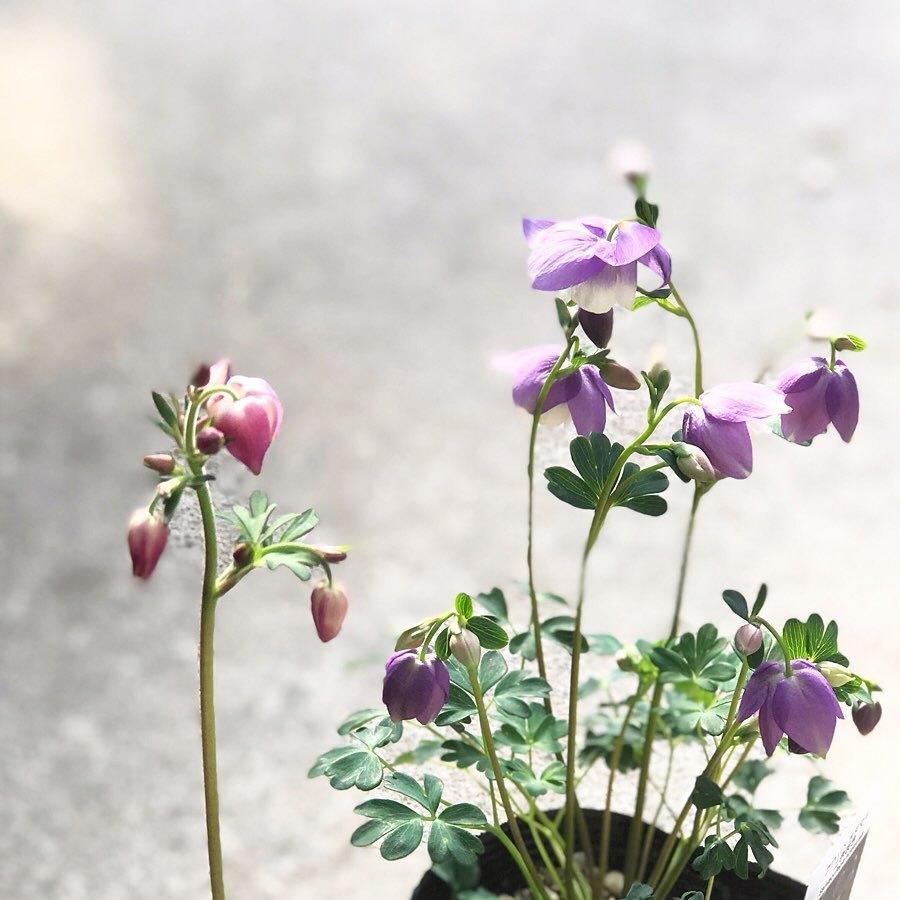 春のピンク✨_f0220152_19222712.jpg