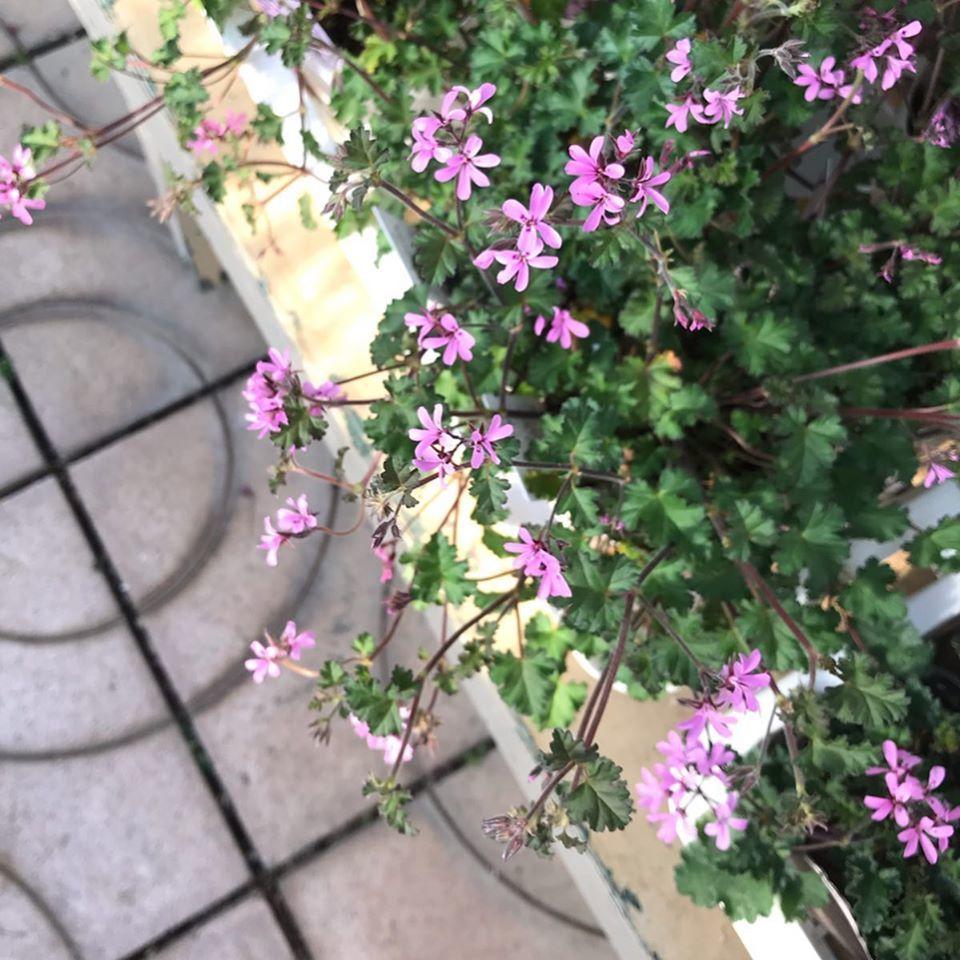 春のピンク✨_f0220152_19223401.jpg