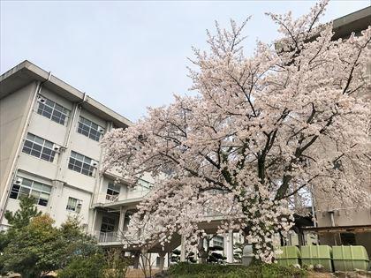 満開の春_e0044657_23125053.jpg