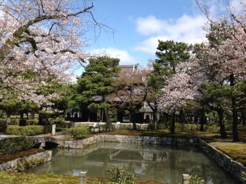 京都桜たより 2020_b0153663_14101724.jpeg