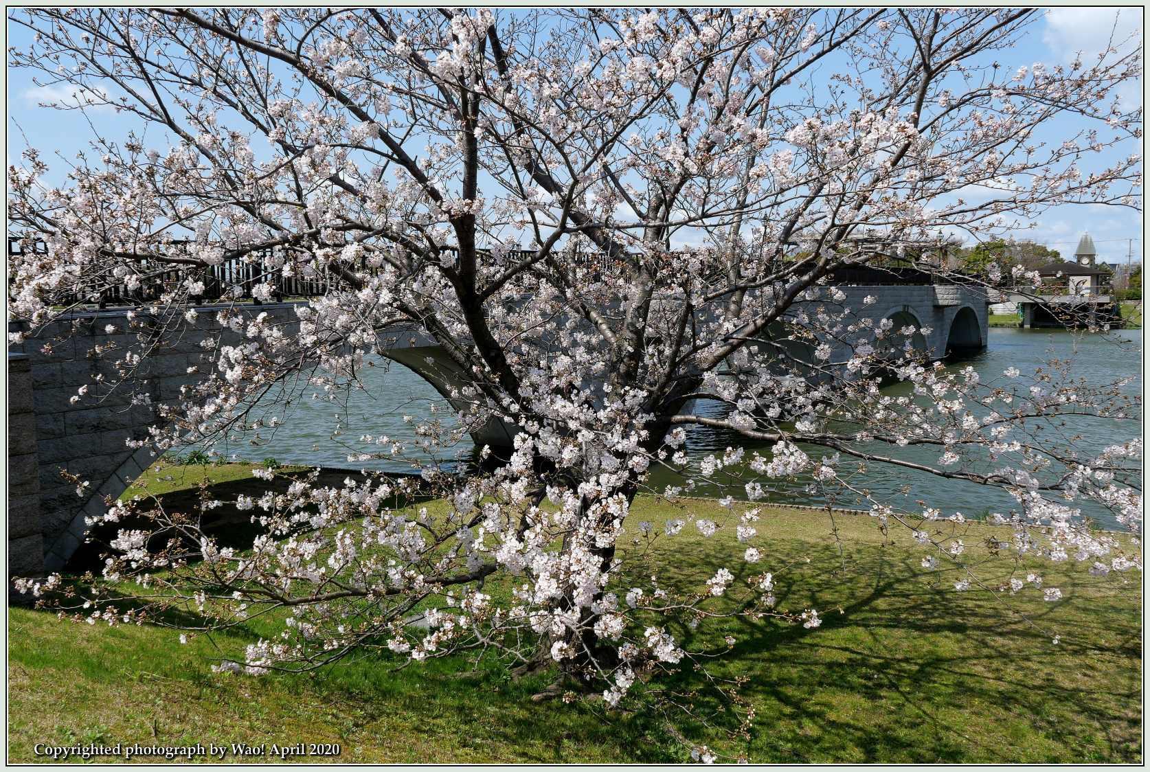 桜新幹線と在来線が行ったり来たり_c0198669_17401608.jpg