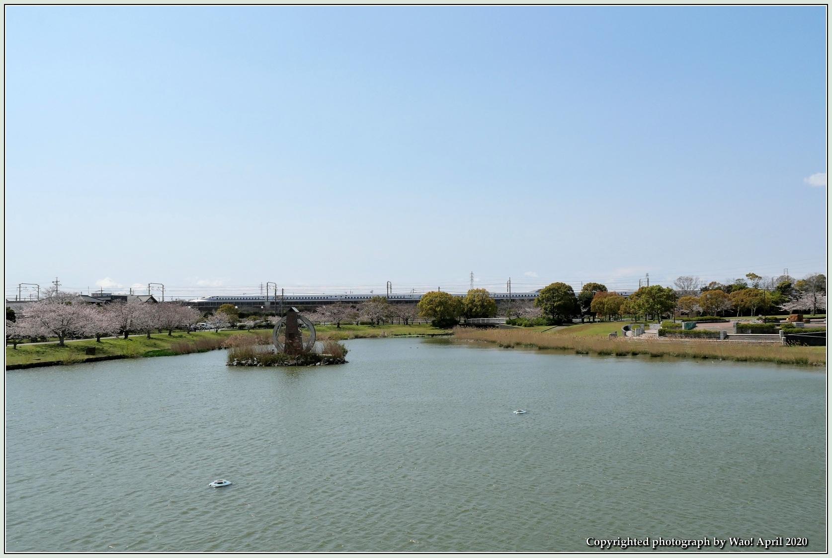 桜新幹線と在来線が行ったり来たり_c0198669_17401929.jpg