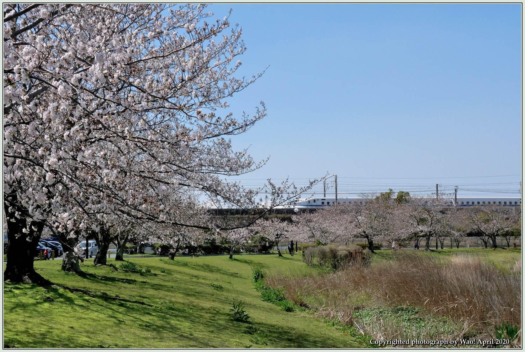 桜新幹線と在来線が行ったり来たり_c0198669_17402414.jpg