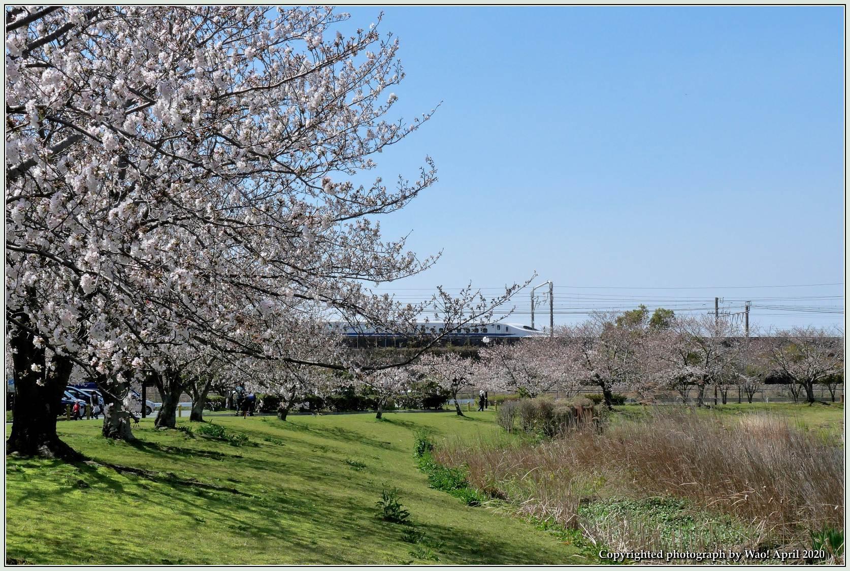 桜新幹線と在来線が行ったり来たり_c0198669_17403189.jpg