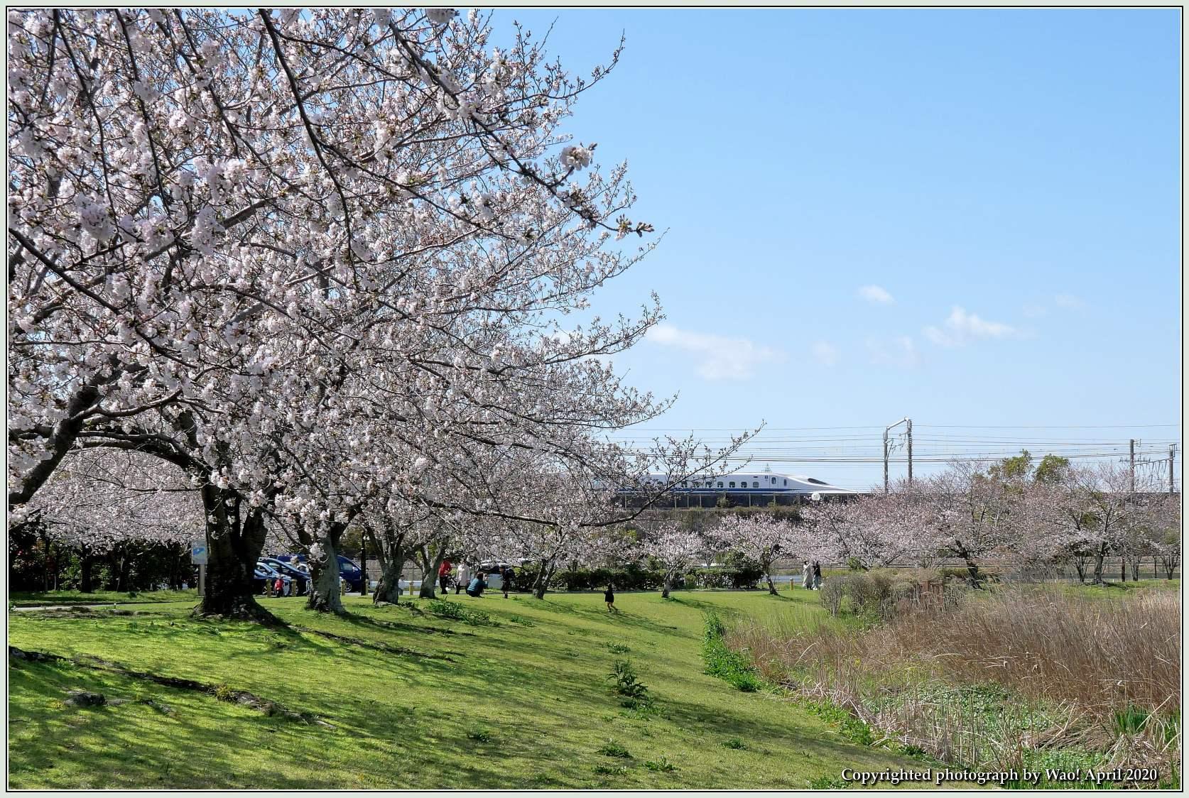桜新幹線と在来線が行ったり来たり_c0198669_17410820.jpg