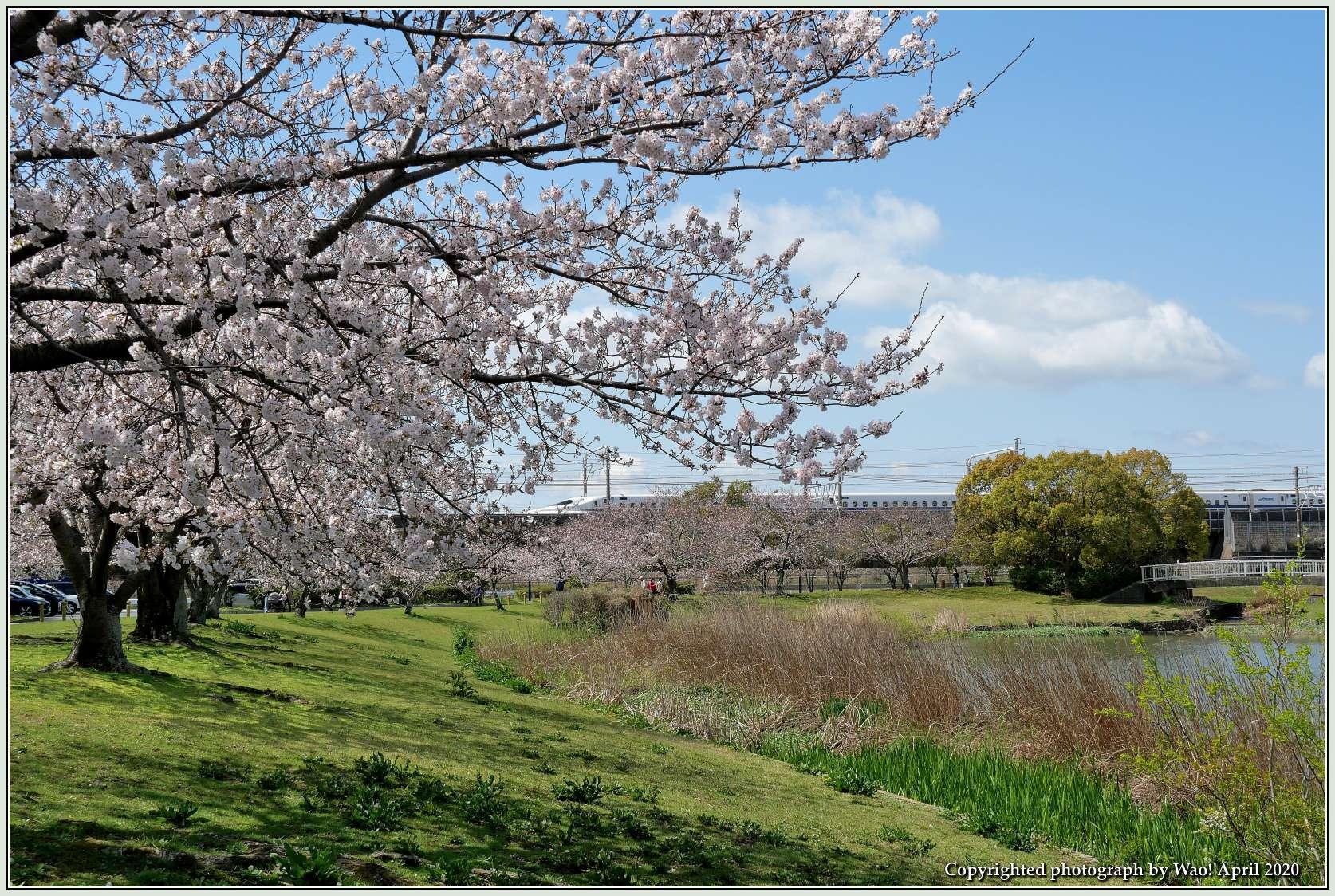 桜新幹線と在来線が行ったり来たり_c0198669_17411284.jpg