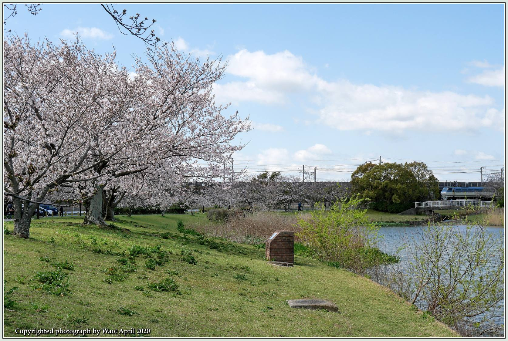 桜新幹線と在来線が行ったり来たり_c0198669_17425320.jpg