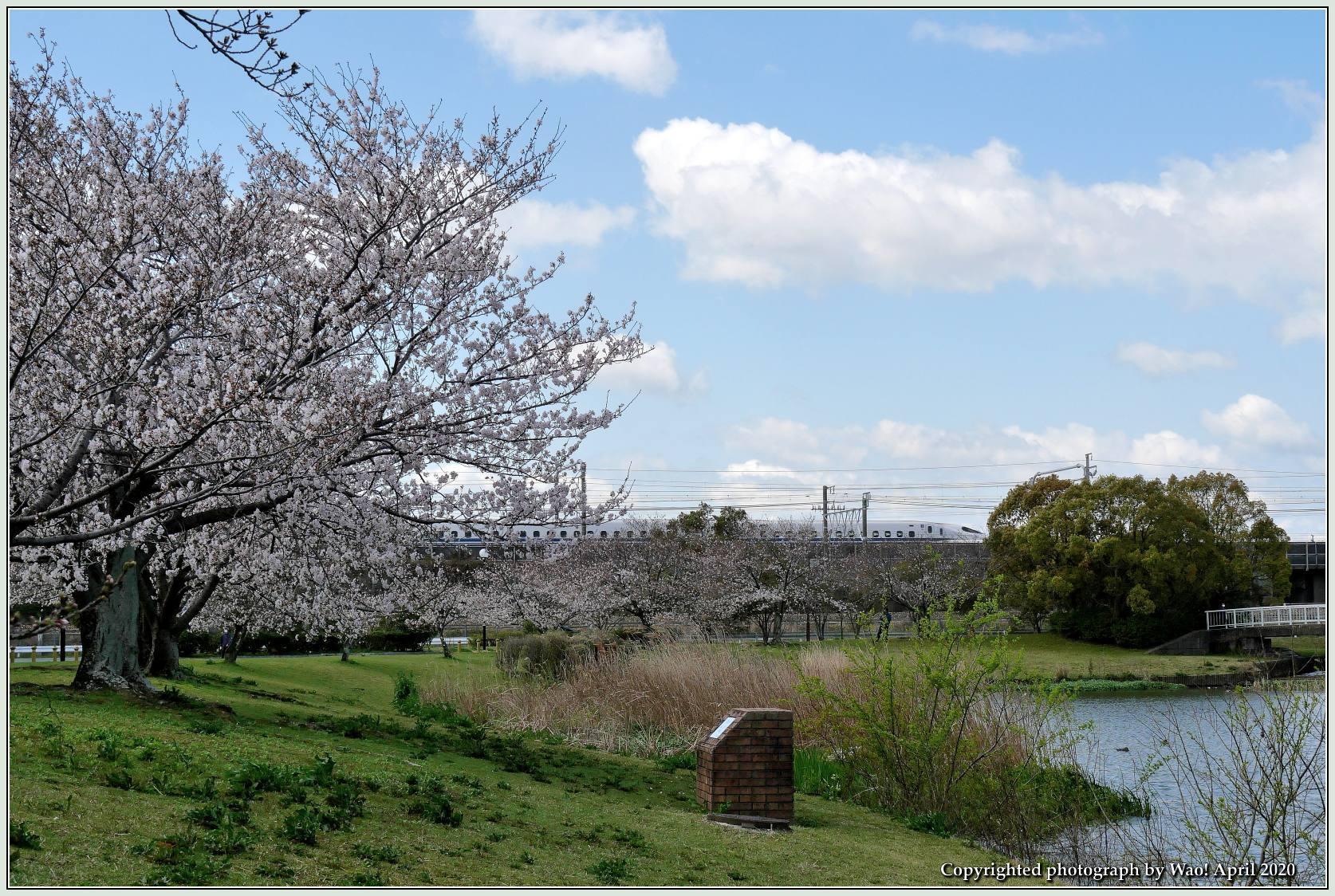 桜新幹線と在来線が行ったり来たり_c0198669_17425597.jpg