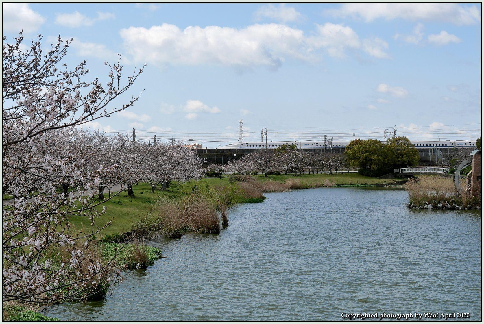 桜新幹線と在来線が行ったり来たり_c0198669_17431893.jpg
