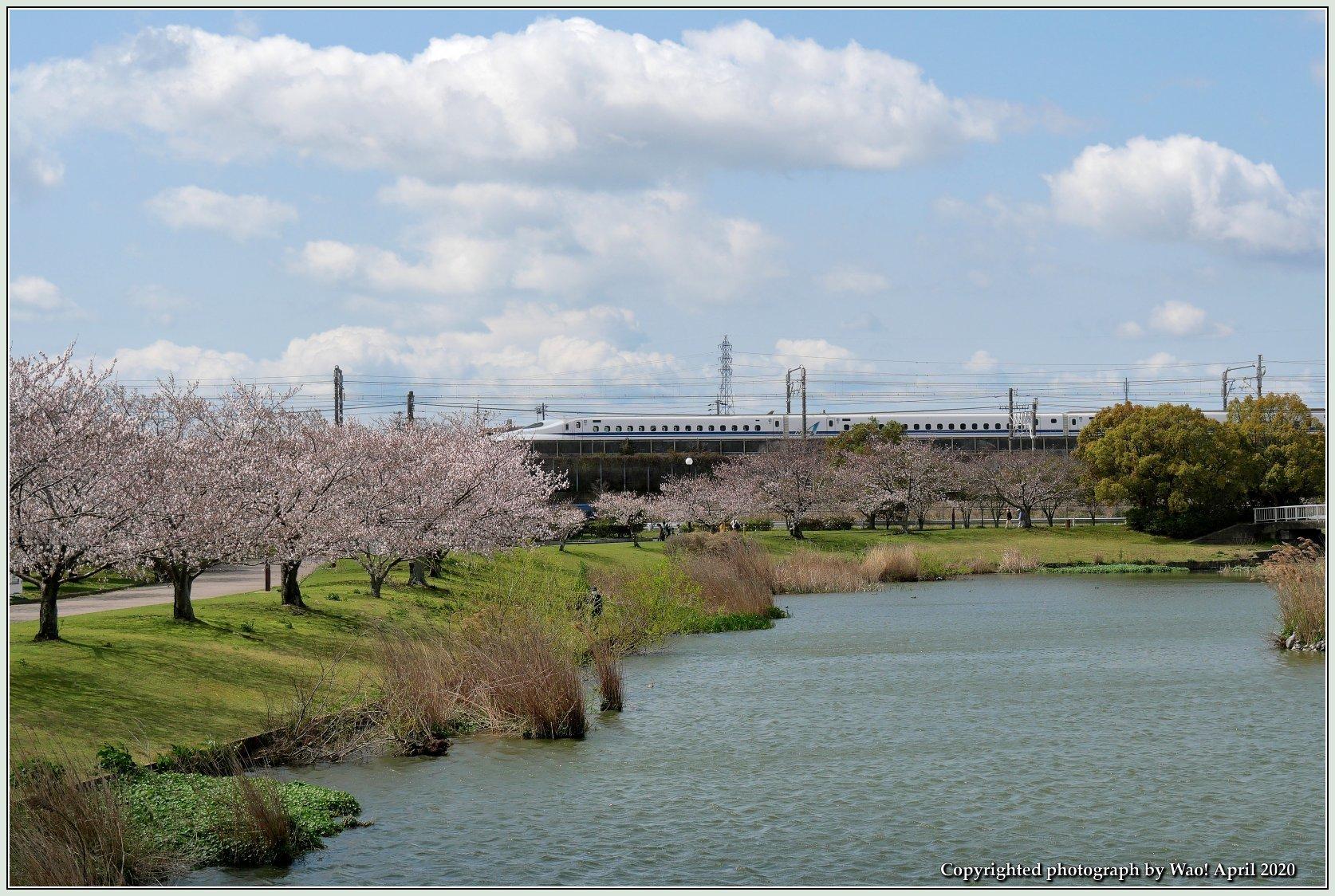 桜新幹線と在来線が行ったり来たり_c0198669_17432001.jpg