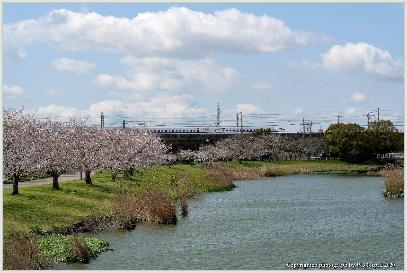 桜新幹線と在来線が行ったり来たり_c0198669_17432208.jpg