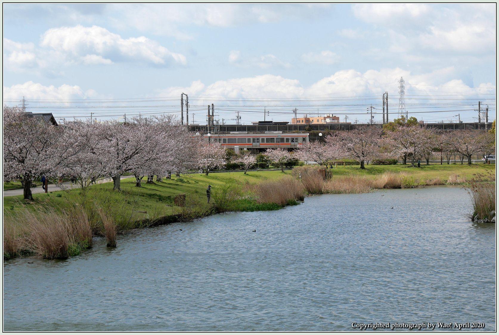 桜新幹線と在来線が行ったり来たり_c0198669_17432872.jpg
